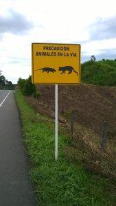 was sind das fuer Ratten, vor denen Autofahrer gewarnt werden?
