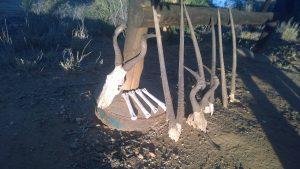 Hartebeest und Oryx
