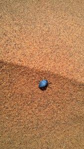 Käfer in der Wüste