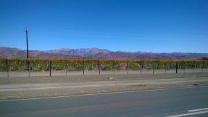 Weinanbau am Oranjeriver, dahinter Wüste